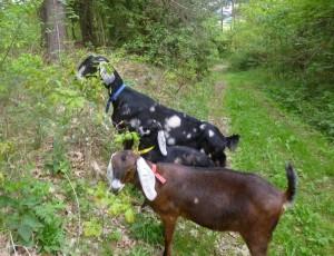 První velká procházka do lesa pro naší Carmenku,